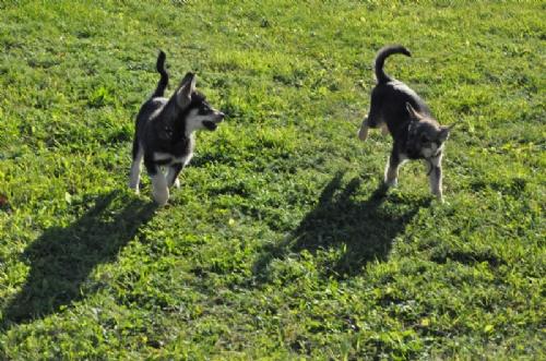 Jag och hundarna! - Bild 6