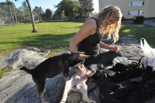 Jag och hundarna! - Bild 1