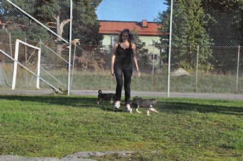 Jag och hundarna! - Bild 4