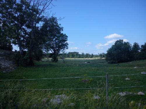 12km - 11460 steg - jag bor i en otroligt vacker kommun! - Bild 7
