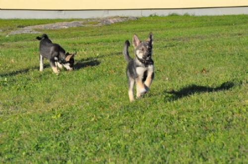 Jag och hundarna! - Bild 5